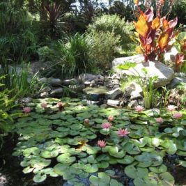 Botanic Garden in San Diego