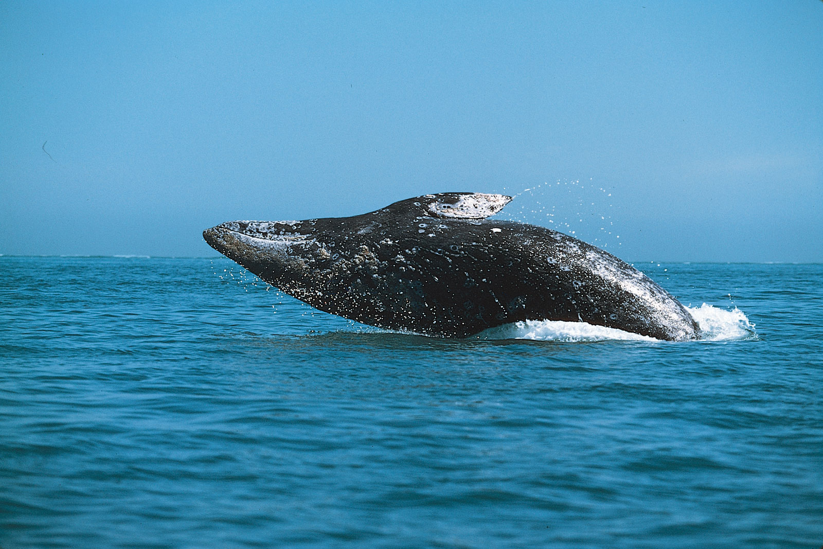 Whale Watching San Go Blue It S Summer In California Suites Hotel